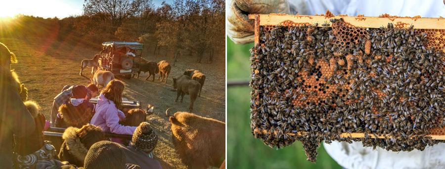 Safari y panel de abejas